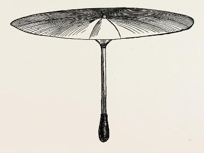 Umbrella for Hawks--Giclee Print