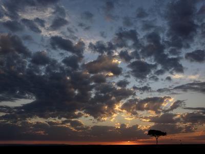 Umbrella Thorn Acacia (Acacia Tortilis) and Hot Air Balloons Silhouetted at Sunrise on the Savanna-Adam Jones-Photographic Print