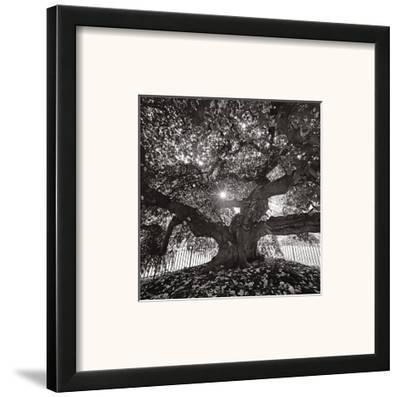 Under Camperdown Elm, Prospect Park-Henri Silberman-Framed Art Print