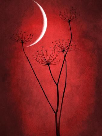 https://imgc.artprintimages.com/img/print/under-the-moon-2_u-l-q1bk7vv0.jpg?p=0
