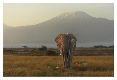 Under The Roof Of Africa-Massimo Mei-Giclee Print