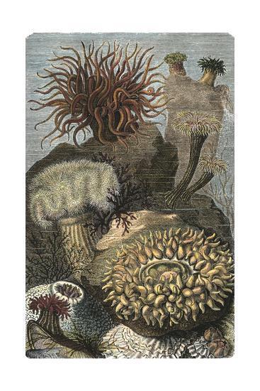 Under the Sea II-Vision Studio-Art Print