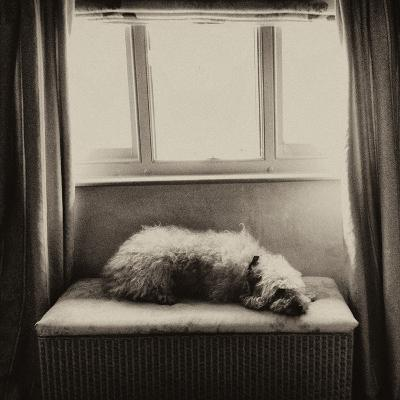 Under the Window-Tim Kahane-Photographic Print
