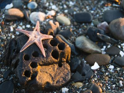 Underneath Side of a Sea Star Washed Up on a Rocky Beach-James Forte-Photographic Print