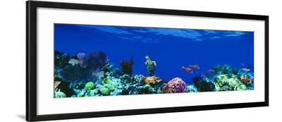 Underwater, Caribbean Sea--Framed Photographic Print