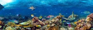 Underwater Coral Reef Landscape Super Wide Banner Background in the Deep Blue Ocean with Colorful F