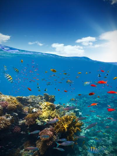Underwater Coral Reef with Horizon and Water Waves-Jakub Gojda-Photographic Print
