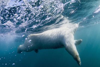 Underwater Polar Bear by Harbour Islands, Nunavut, Canada-Paul Souders-Photographic Print