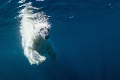 https://imgc.artprintimages.com/img/print/underwater-polar-bear-nunavut-canada_u-l-pzqpyi0.jpg?p=0
