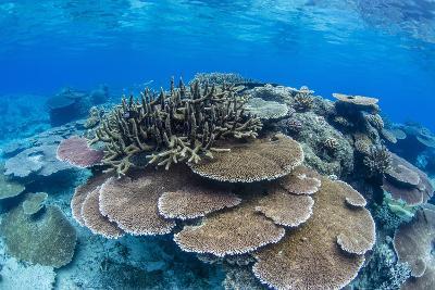 Underwater Profusion of Hard Plate Corals at Pulau Setaih Island, Natuna Archipelago, Indonesia-Michael Nolan-Photographic Print