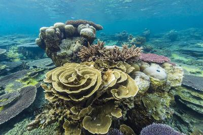 Underwater Reef on a Remote Small Islet in the Badas Island Group Off Borneo, Indonesia-Michael Nolan-Photographic Print