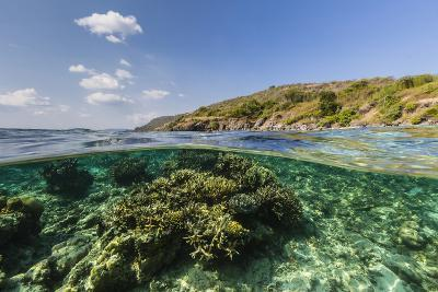 Underwater Reef System of the Marine Reserve on Moya Island, Nusa Tenggara Province, Indonesia-Michael Nolan-Photographic Print