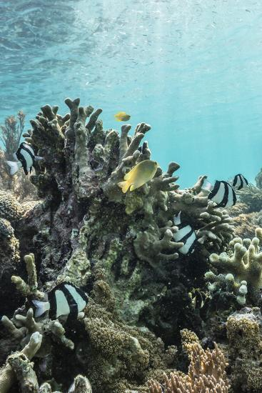Underwater Reef System on Pink Sand Beach, Komodo National Park, Komodo Island, Indonesia-Michael Nolan-Photographic Print