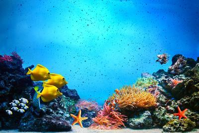 Underwater Scene-Michal Bednarek-Photographic Print