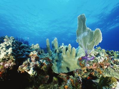 Underwater View of a Reef in the British Virgin Islands-Raul Touzon-Photographic Print