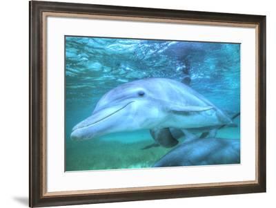Underwater view of Bottlenose Dolphin, Roatan, Bay Islands, Honduras-Stuart Westmorland-Framed Photographic Print