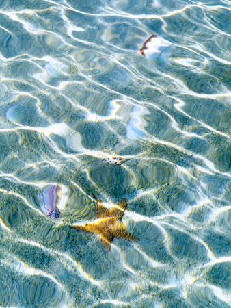 https://imgc.artprintimages.com/img/print/underwater-view-of-sea-star-and-seashells-bahamas_u-l-q1dem490.jpg?p=0