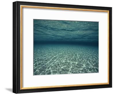Underwater View-Bill Curtsinger-Framed Photographic Print