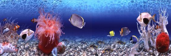 underwater-world-panorama