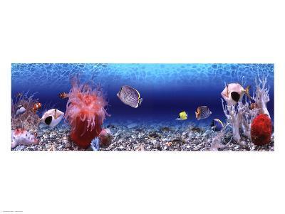 Underwater World - Panorama--Art Print