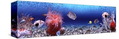 Underwater World - Panorama--Stretched Canvas Print