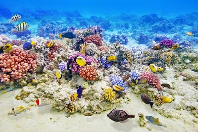 Underwater World with Corals and Tropical Fish.-Brian K-Photographic Print