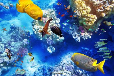 https://imgc.artprintimages.com/img/print/underwater-world-with-corals-and-tropical-fish_u-l-q105p7k0.jpg?p=0