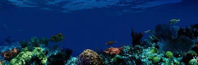 Underwater--Photographic Print