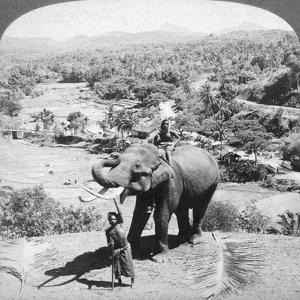 An Elephant and its Keeper, Sri Lanka, 1902 by Underwood & Underwood