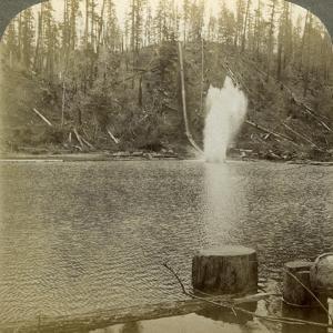 Log Flume, Oregon, Usa by Underwood & Underwood