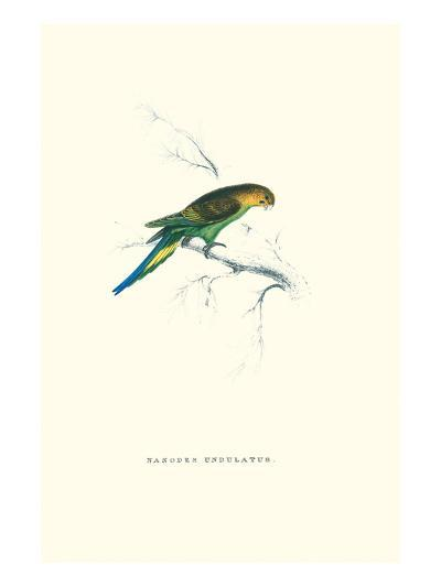 Undulated Parakeet - Nelopsittacus Undulatus-Edward Lear-Art Print