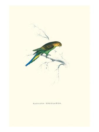 https://imgc.artprintimages.com/img/print/undulated-parakeet-nelopsittacus-undulatus_u-l-pgg39f0.jpg?p=0