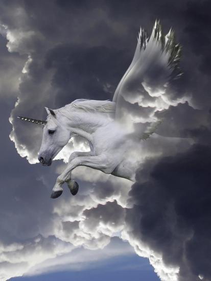 Unicorn 62-Bob Langrish-Photographic Print