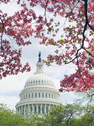 United States Capitol Dome in Washington, D.C. and Flowering Spring Trees-Tim Mcguire-Photographic Print