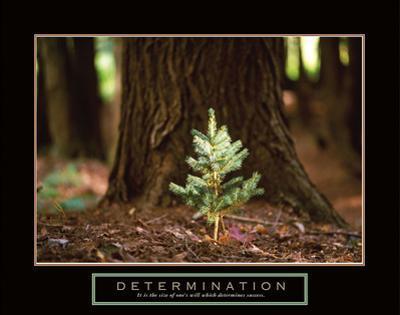 Determination – Little Pine