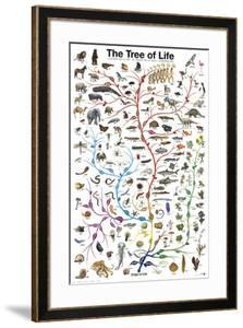 Evolution - The Tree of Life by Unknown
