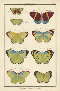 Histoire Naturelle Butterflies II by Unknown