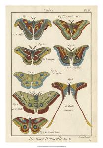 Histoire Naturelle Butterflies III by Unknown
