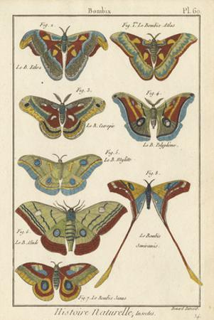 Histoire Naturelle Butterflies III