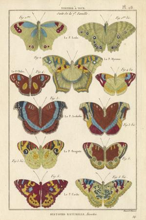 Histoire Naturelle Butterflies V