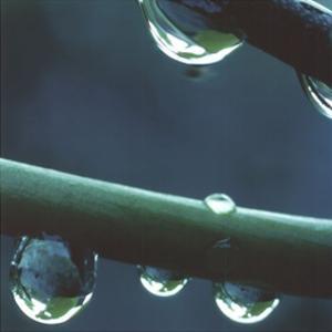Rain by Unknown