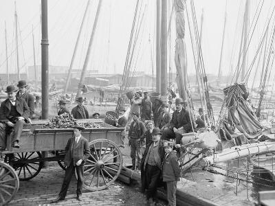 Unloading Oyster Luggers, Baltimore, Maryland, 1905--Photographic Print