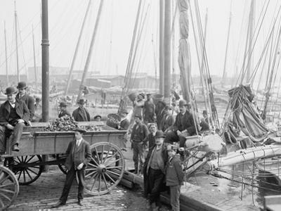 Unloading Oyster Luggers, Baltimore, Maryland, 1905