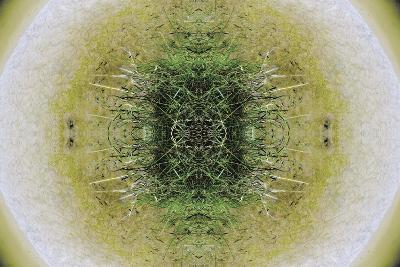 Unnatural 6.1-Giovanni Cafagna-Giclee Print