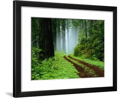 Unpaved Road in Redwoods Forest-Darrell Gulin-Framed Photographic Print