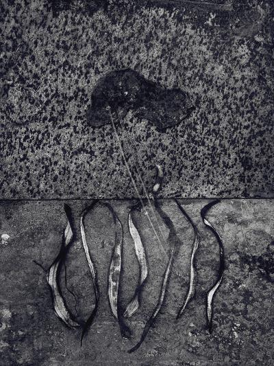 Untitled, 1990-2000-Didier Gaillard-Photographic Print