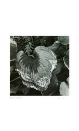 Untitled (dying leaf)-Morry Katz-Collectable Print