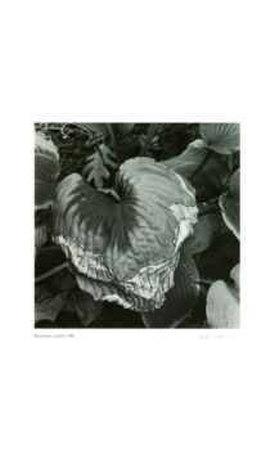 https://imgc.artprintimages.com/img/print/untitled-dying-leaf_u-l-eryf90.jpg?p=0