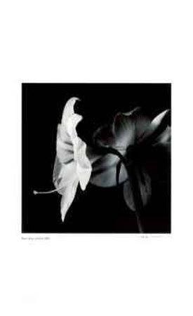 https://imgc.artprintimages.com/img/print/untitled-flower-with-long-stamen_u-l-eryif0.jpg?p=0