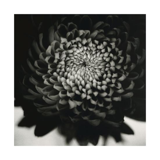 Untitled (Flower)-David Johndrow-Photographic Print